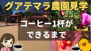 【グアテマラのコーヒー農園見学レポ】歴史・豆の特徴・製造工程など一挙紹介|フィラデルフィア農園ツアー