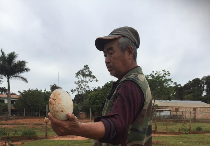 【民宿小林】南米パラグアイ・伝説の日本人宿 イグアス居住地